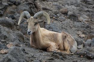 Taken at the Living Desert Zoo and Gardens at Palm Desert, CA.